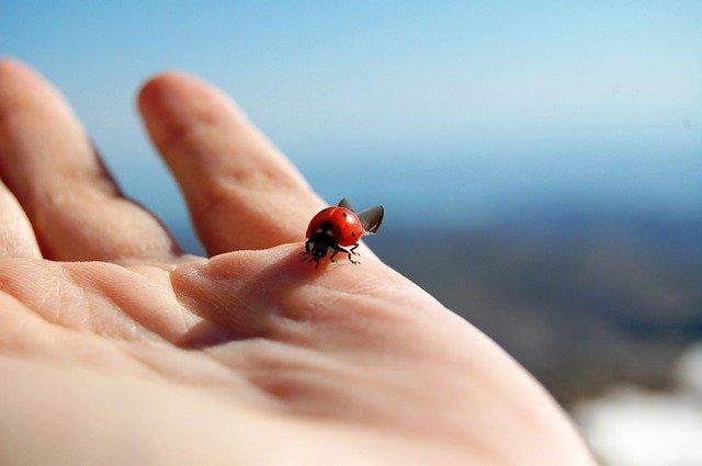 手の上のてんとう虫