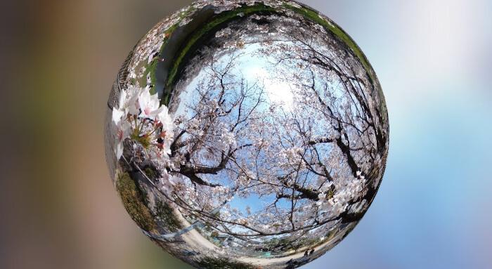桜の球体画像