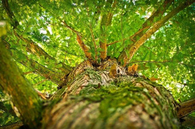 樹木を見上げる